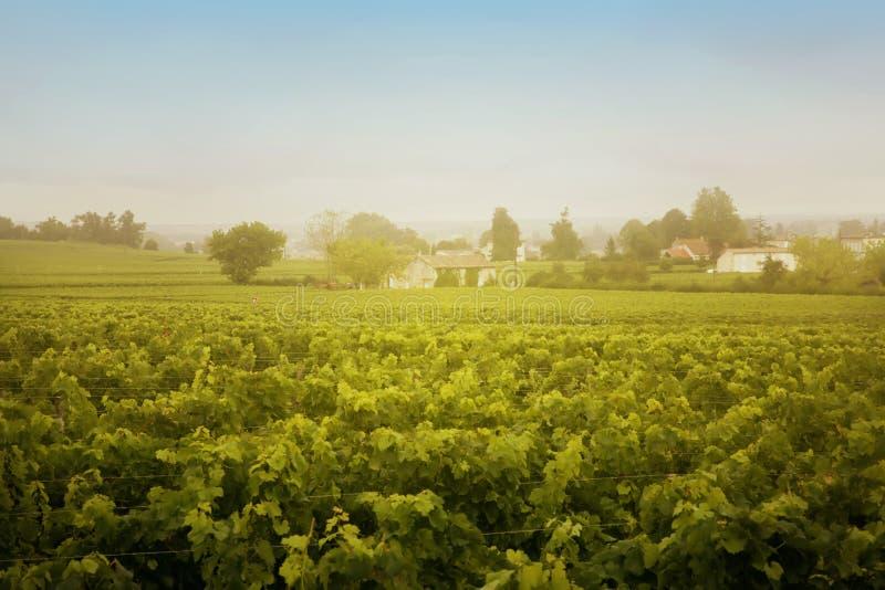 Paisaje del vino fotos de archivo