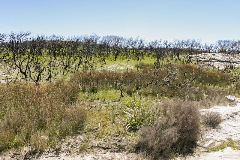 Paisaje después del bushfire Parque nacional de Booderee NSW australia fotografía de archivo libre de regalías