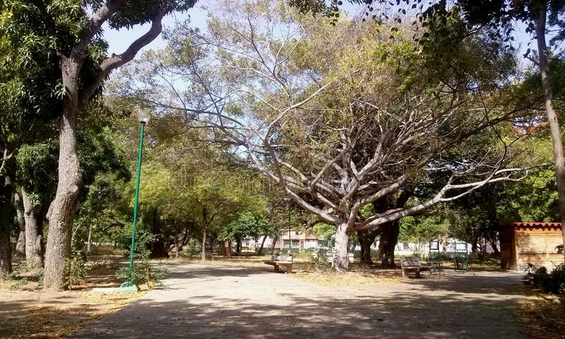 Paisaje do ambiente do bonito do parque do parque fotos de stock royalty free