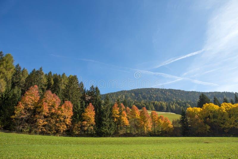 Paisaje en dolomías, Italia del otoño, cerca del pueblo de Braies Montañas, abetos y alerces que cambian asumir del color fotos de archivo libres de regalías
