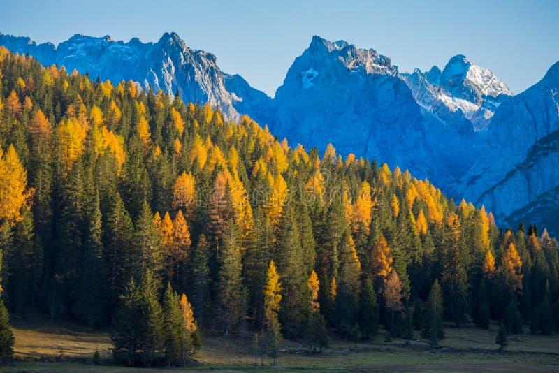 Paisaje en dolomías, Italia del otoño Montañas, abetos y alerces que cambian el color si se asume que el color amarillo típico de foto de archivo