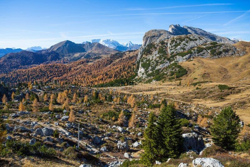 Paisaje en dolomías, Italia del otoño Montañas, abetos y sobre todo alerces que cambian el color si se asume que el aut amarillo  imágenes de archivo libres de regalías
