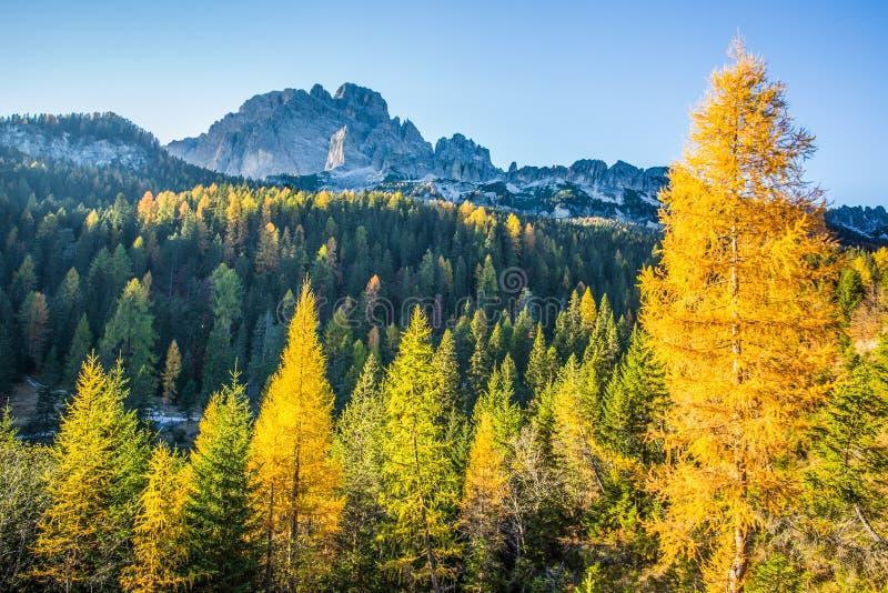 Paisaje en dolomías, Italia del otoño Montañas, abetos y sobre todo alerces que cambian el color si se asume que el aut amarillo  foto de archivo