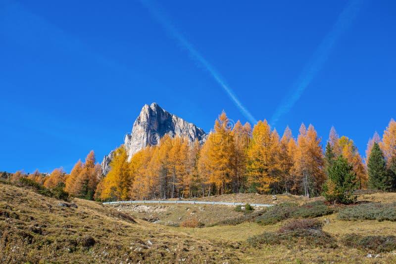 Paisaje en dolomías, Italia del otoño Montañas, abetos y sobre todo alerces que cambian el color si se asume que el aut amarillo  fotografía de archivo