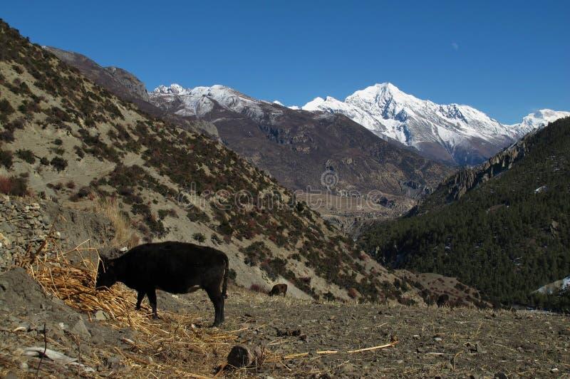 Paisaje en el área de la protección de Annapurna, Nepal imágenes de archivo libres de regalías