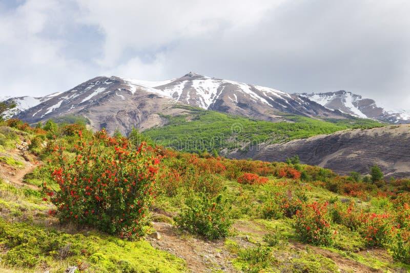 Paisaje en el camino al Torres del Paine, Patagonia, Chile fotos de archivo libres de regalías