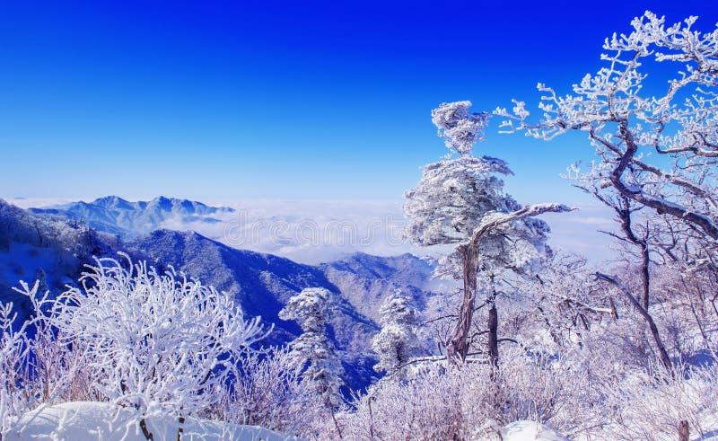 Paisaje en el invierno, Deogyusan en Corea imagen de archivo
