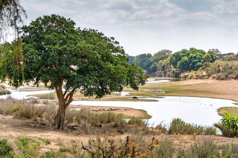 Paisaje en el parque nacional de Kruger, Suráfrica fotos de archivo libres de regalías