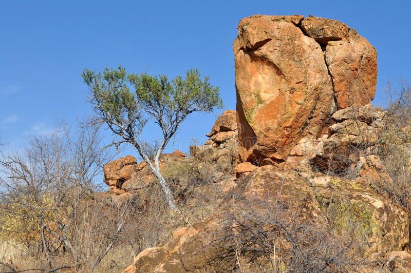 Paisaje en el parque nacional de Mapungubwe fotografía de archivo libre de regalías