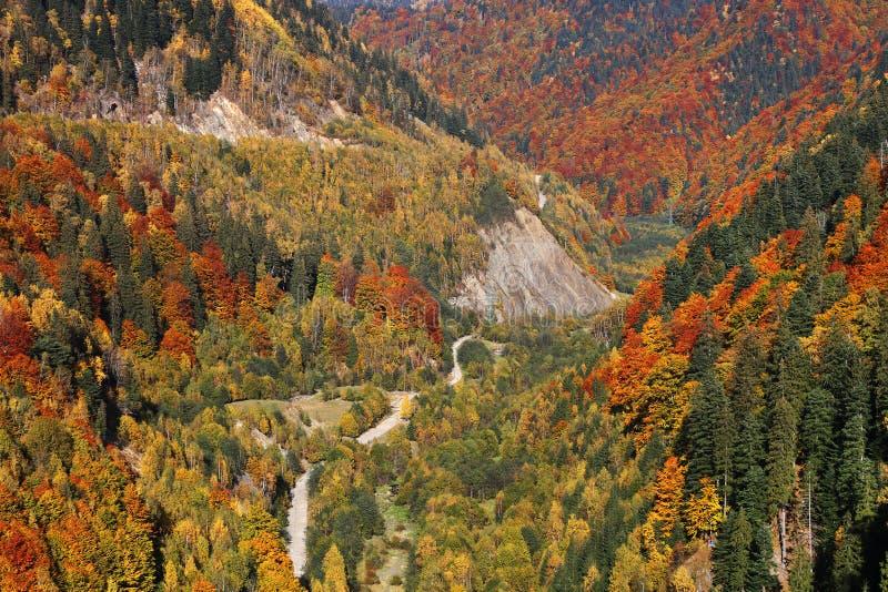 Paisaje en los bosques, rumano Cárpatos del otoño fotos de archivo