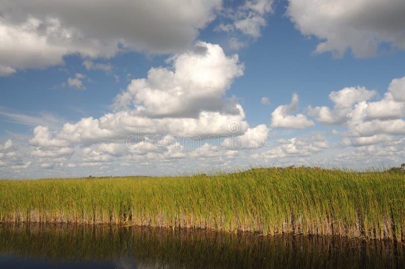 Paisaje en los marismas, la Florida fotografía de archivo libre de regalías