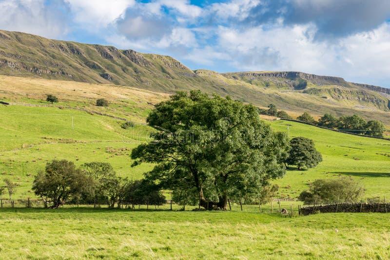 Paisaje en los valles de Yorkshire, Reino Unido foto de archivo libre de regalías