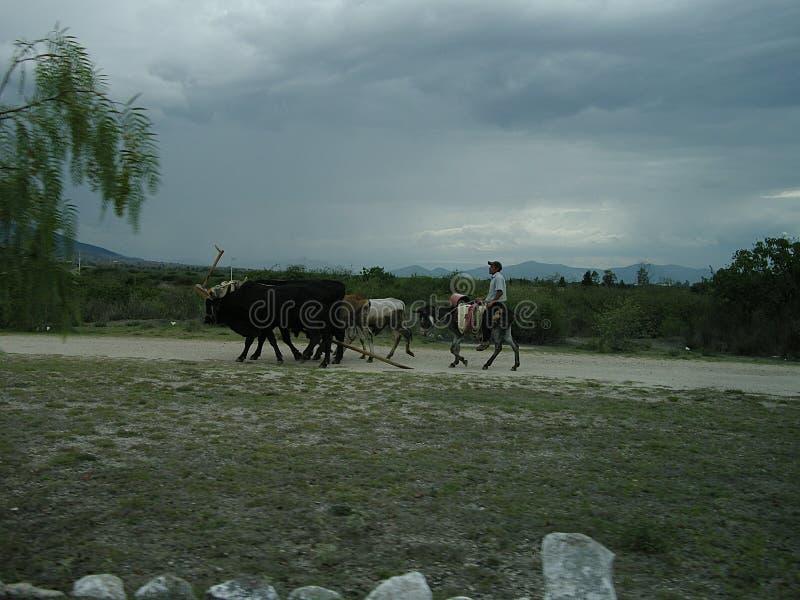 Paisaje en México con el granjero y los animales imagen de archivo libre de regalías