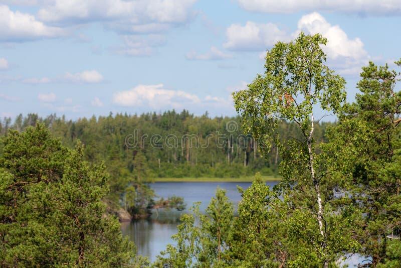 Paisaje en un lago del bosque imagen de archivo