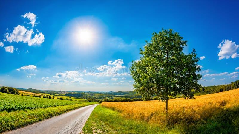 Paisaje en verano con el sol brillante foto de archivo