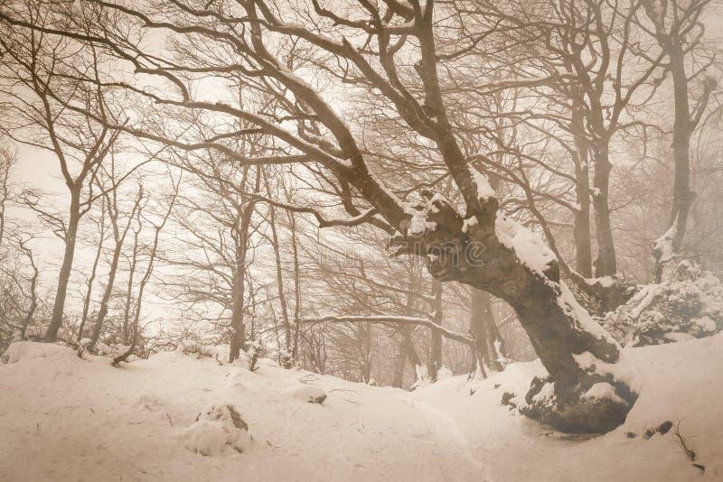 Paisaje encantado del invierno con nieve en el parque de Monte Cucco fotos de archivo libres de regalías