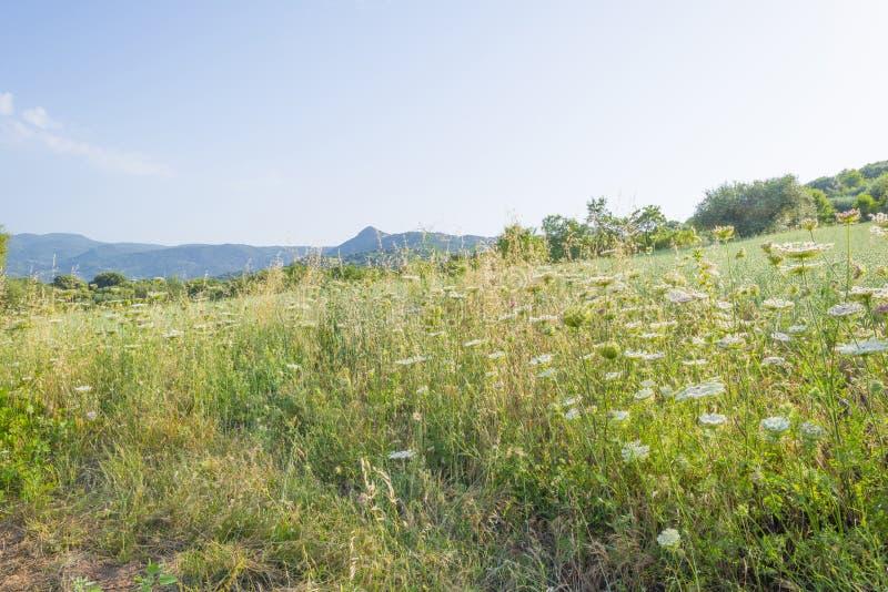 Paisaje escénico de colinas verdes y de montañas rocosas de la isla de Cerdeña imagen de archivo