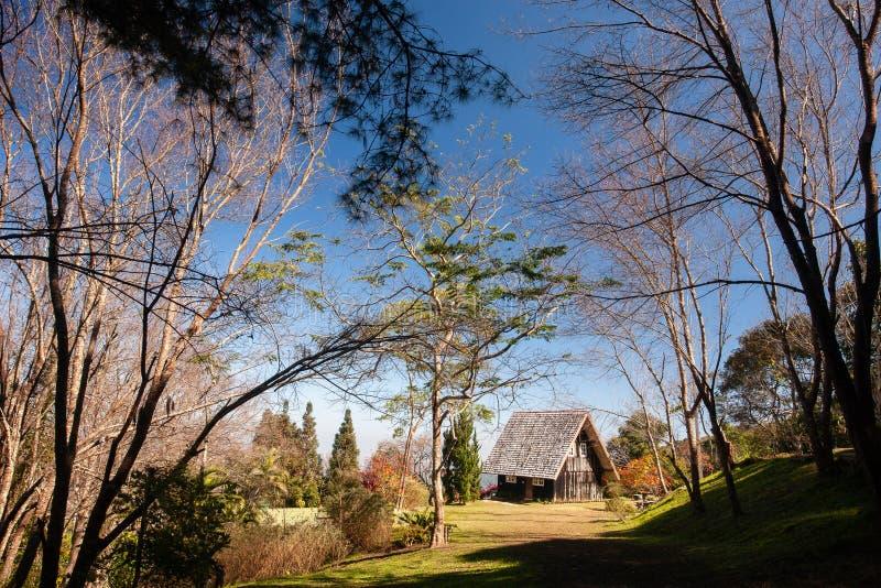Paisaje escénico de la cabaña de madera en la forma hermosa del bosque del invierno de ramas de árboles Luz del sol caliente con  fotografía de archivo