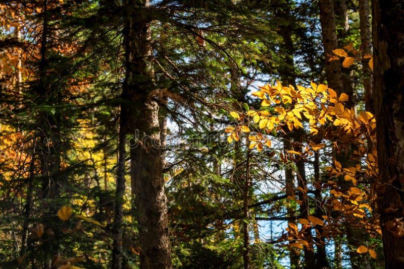 Paisaje escénico del bosque iluminado por el sol hermoso del otoño fotografía de archivo libre de regalías