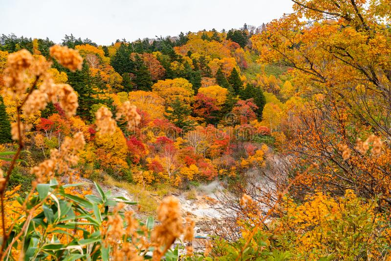 Paisaje escénico del colorido follaje de la montaña del otoño en Fuke no Yu Onsen fotos de archivo