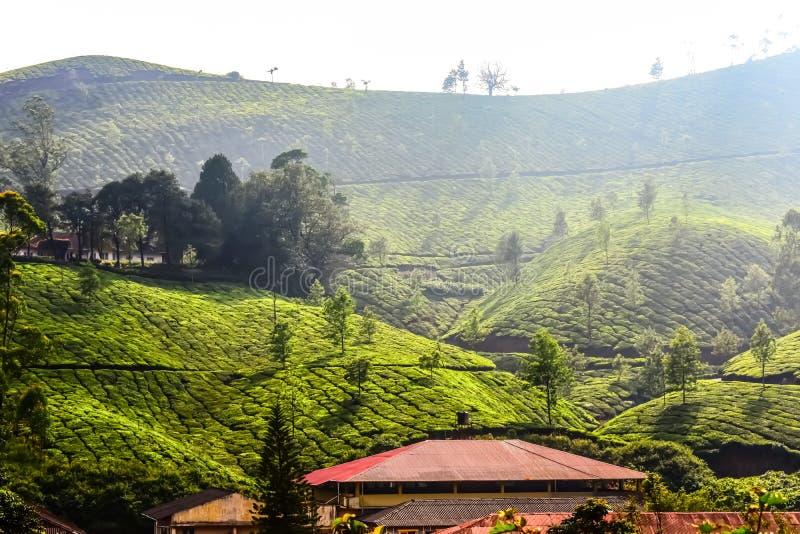 Paisaje escénico del jardín de té imágenes de archivo libres de regalías