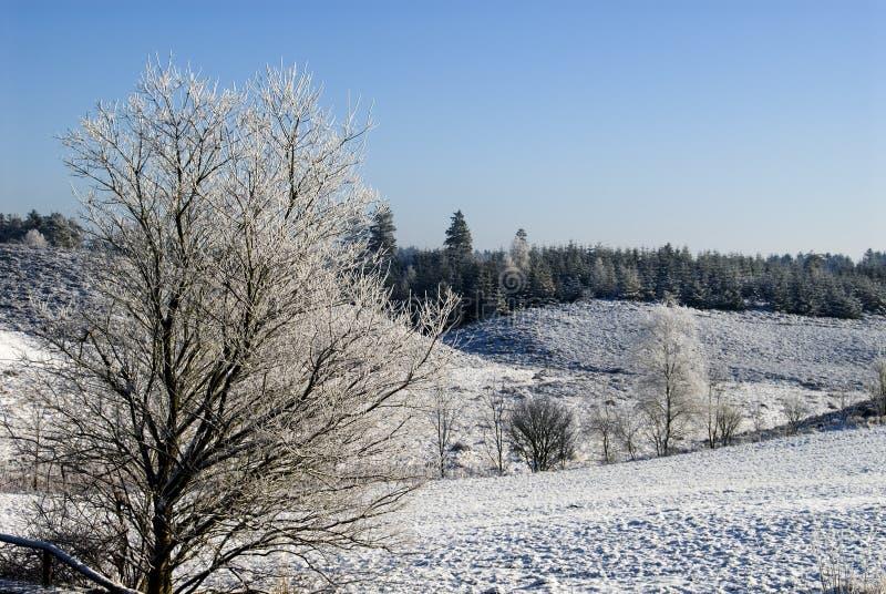 Paisaje Escandinavia del invierno imagenes de archivo