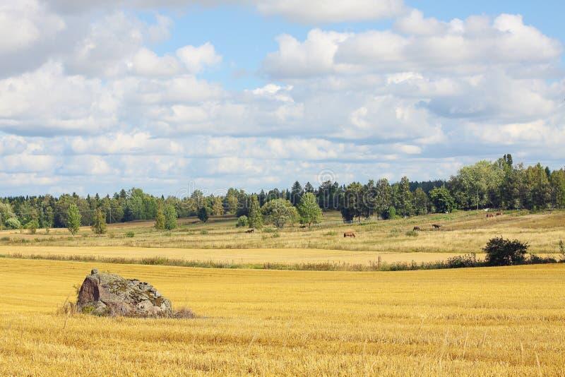 Paisaje escandinavo hermoso - campo y granja fotos de archivo libres de regalías