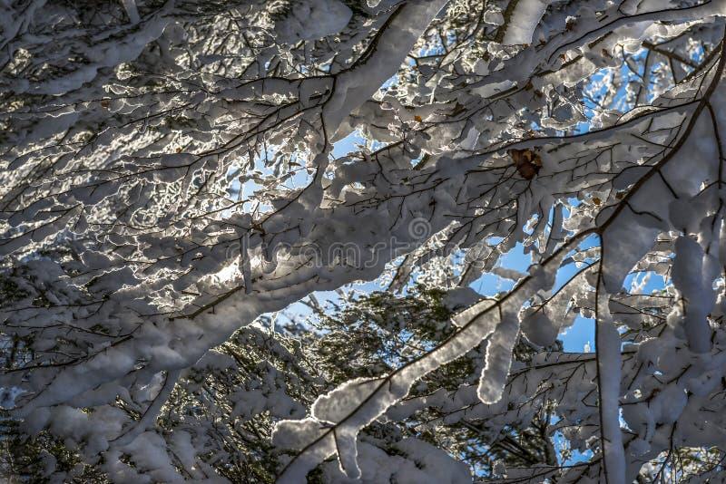 Paisaje escarchado del invierno en las ramas nevosas del bosque cubiertas con nieve en tiempo frío del invierno fotos de archivo