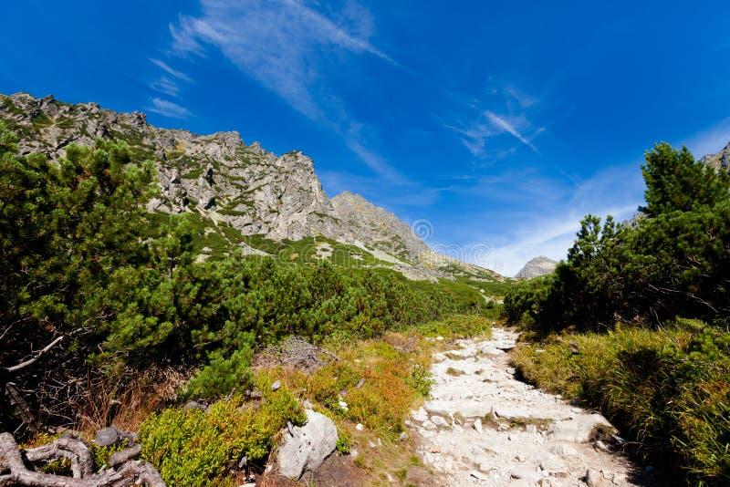 Paisaje eslovaco de Tatra del dolina de Mlynicka fotos de archivo