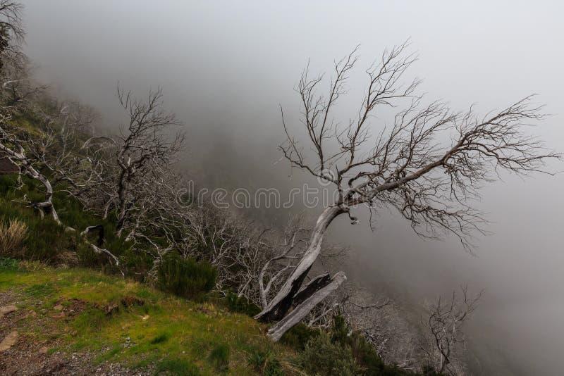 Paisaje espeluznante que muestra un bosque oscuro brumoso con el tre blanco muerto foto de archivo libre de regalías