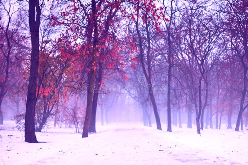 Paisaje espeluznante y de niebla del invierno en parque nevoso, con la trayectoria abandonada Atm?sfera cambiante, melanc?lica, e fotos de archivo libres de regalías