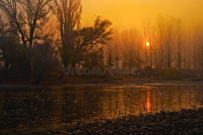 Paisaje fantasmagórico - bosque, río y sol imagenes de archivo