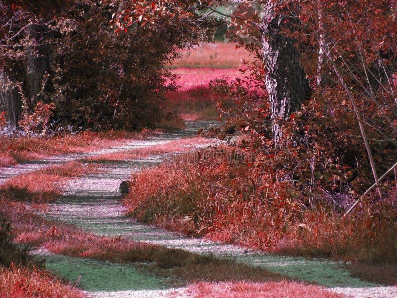 Paisaje fantasmagórico coloreado rojo del árbol forestal Música de la noche imagenes de archivo