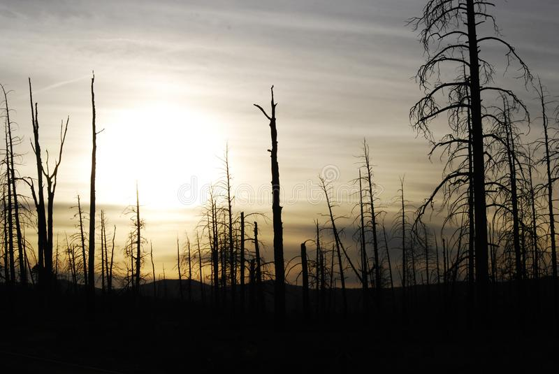 Paisaje fantasmagórico de una silueta oscura del árbol fotografía de archivo libre de regalías