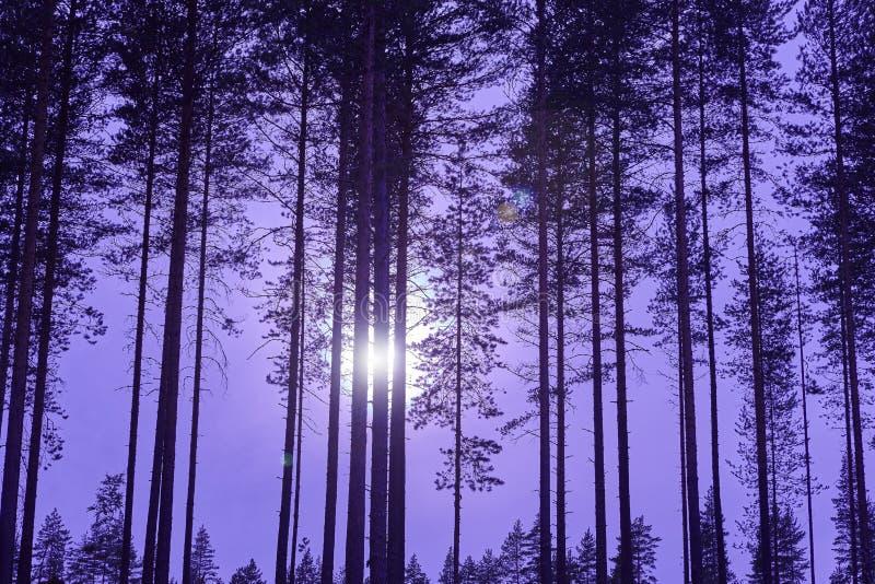 Paisaje finlandés con el bosque y la luna por noche finlandia fotos de archivo