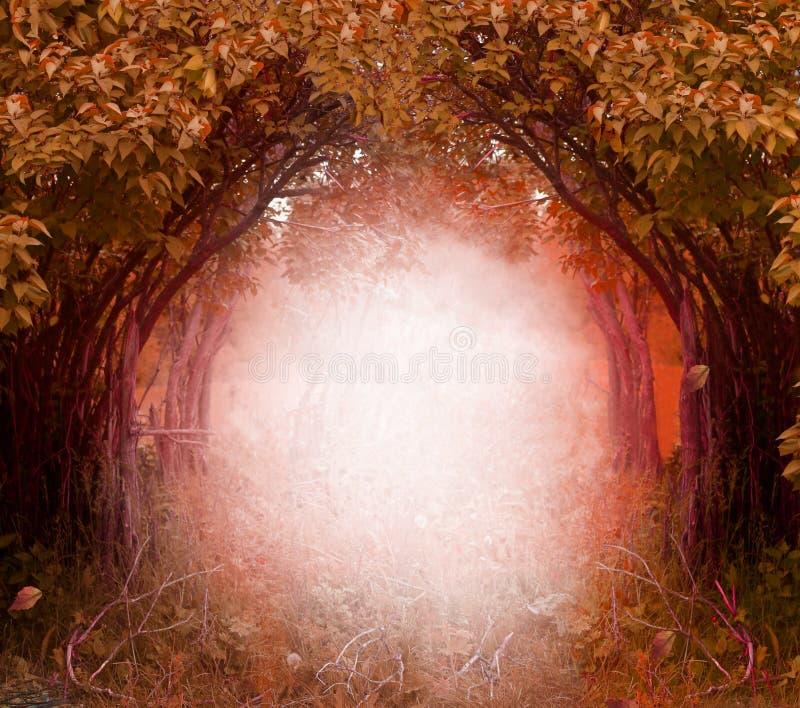 Paisaje forestBeautiful mágico del otoño fotografía de archivo libre de regalías