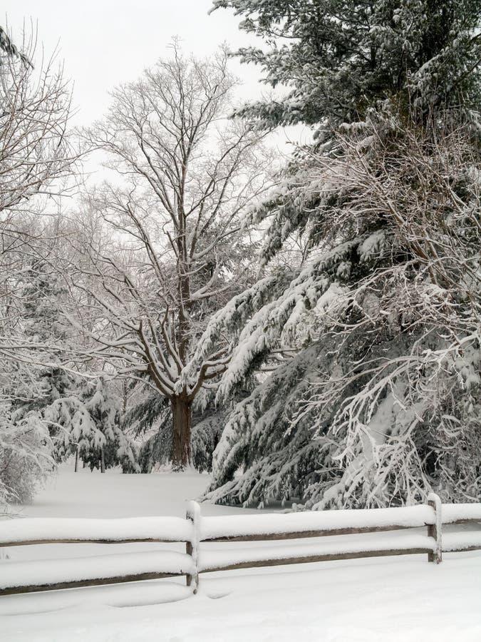 Paisaje fresco de la nieve foto de archivo libre de regalías