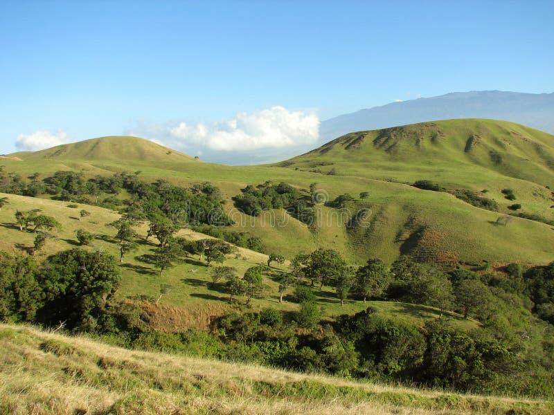 Paisaje hawaiano arrugado foto de archivo libre de regalías