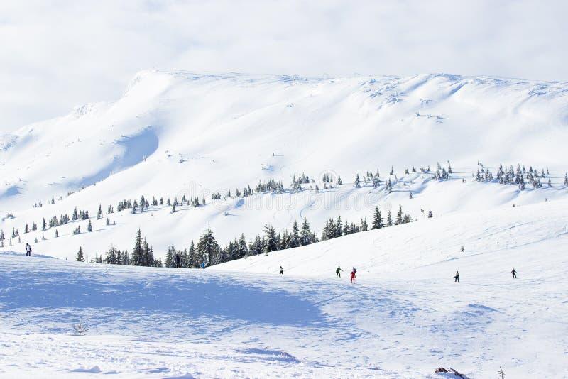 Paisaje hermoso, brillante y soleado de montañas nevosas y del turismo del invierno del bosque de la montaña fotos de archivo libres de regalías