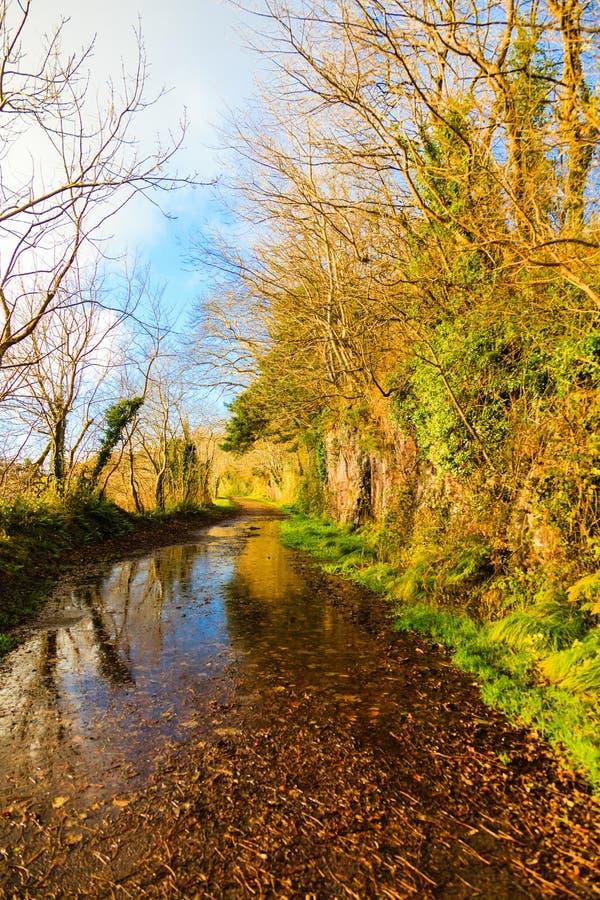 Download Paisaje Hermoso Callejón Co Corcho, Irlanda Imagen de archivo - Imagen de árboles, flora: 44854569