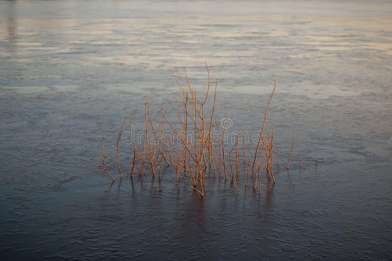 Paisaje hermoso con el sauce viejo en la salida del sol Río fotografía de archivo