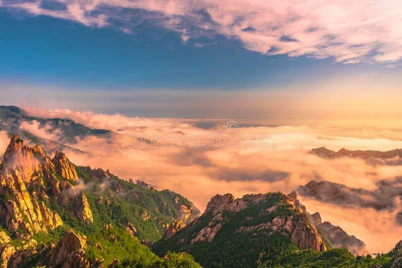 Paisaje hermoso con la niebla de la mañana en la cumbre de Sorakshan en Corea del Sur fotografía de archivo