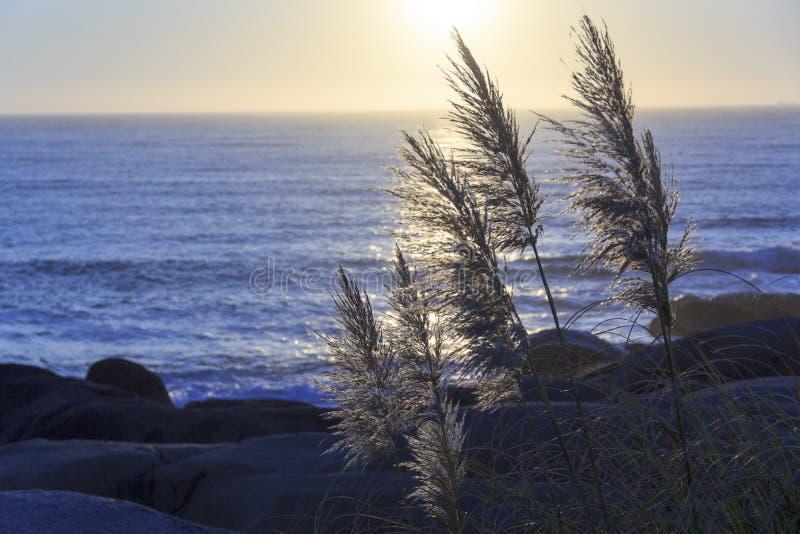 Paisaje hermoso con la puesta del sol en el horizonte, horizont con las hojas imagenes de archivo