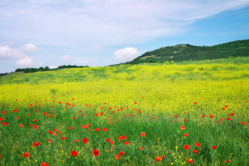 Paisaje hermoso con las flores. imágenes de archivo libres de regalías