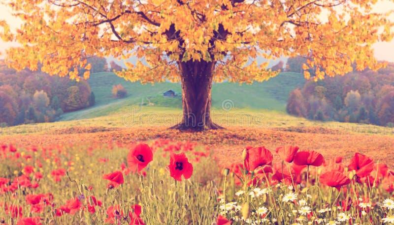 Paisaje hermoso con las flores de la amapola y el solo árbol con grito fotografía de archivo libre de regalías