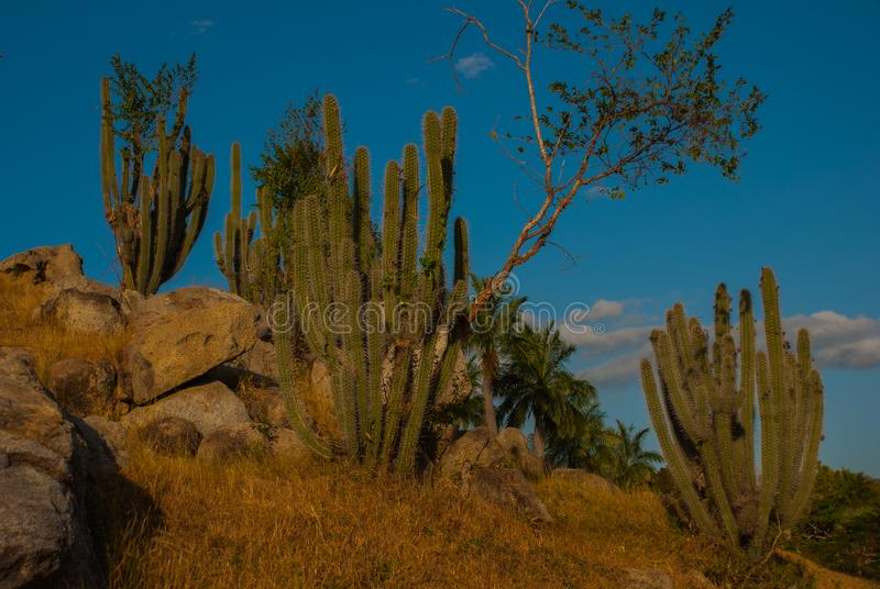 Paisaje hermoso con las vistas del cactus en Cuba foto de archivo
