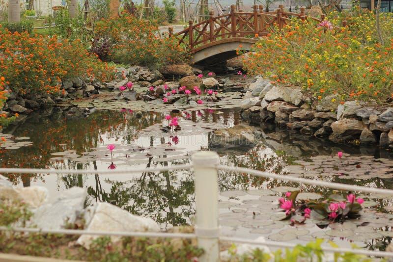 Paisaje hermoso con loto rosado del nymphaea del lirio de agua en el lago fotografía de archivo libre de regalías