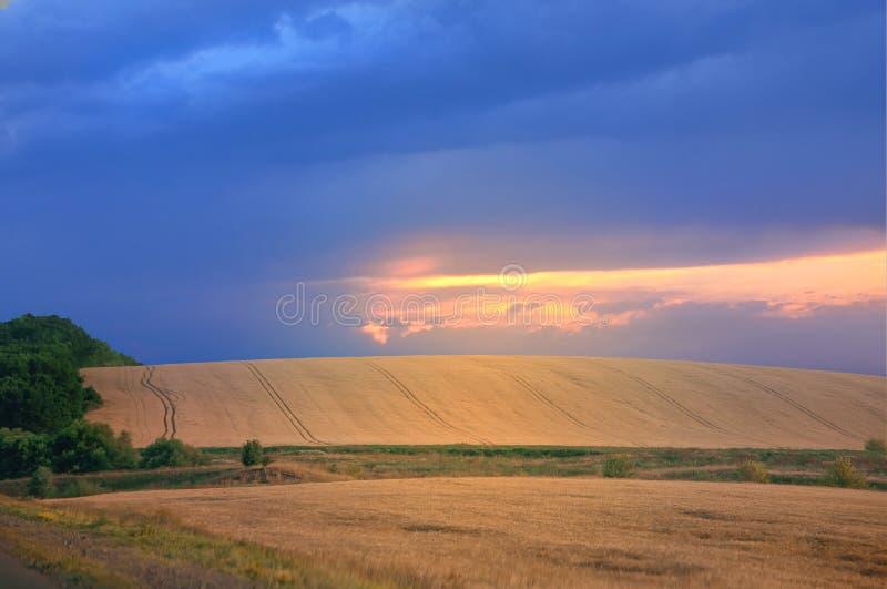 Paisaje hermoso con un campo amarillo que va más allá del horizonte imágenes de archivo libres de regalías