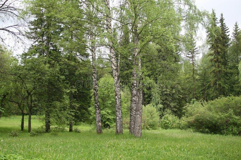 Paisaje hermoso de bosques y de campos foto de archivo