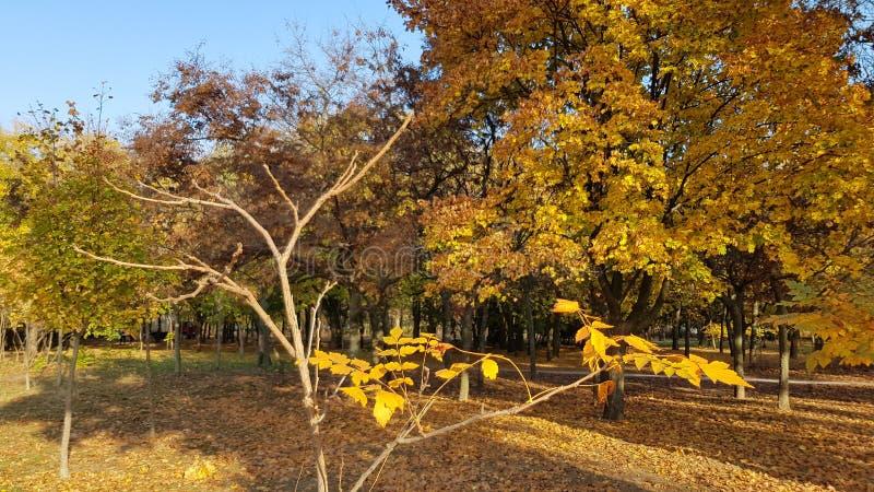 Paisaje hermoso de la caída con luz del sol brillante en ramas de árbol del otoño fotografía de archivo